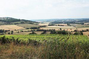 vignoble de Villaines-les-Prévôtes